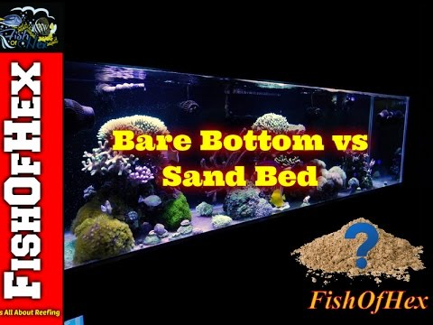 Bare Bottom Vs Sand Bed Aquariums